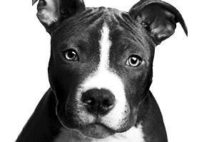 stampics dog rubber stamp